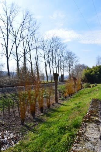 roseaux,narcisses,Nikky,semis,jardin 013.JPG