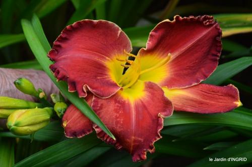 jardin,chez Bernadette,puces,cygnes,pluie 106.JPG
