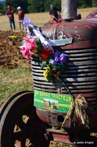 jardin,traditions rurales,les filles,Romane,citouilles,coeurs 055.JPG