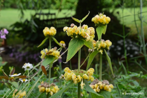 jardin,chez Bernadette,puces,cygnes,pluie 113.JPG