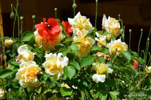 fête de la fraise Vergt,roses jardin 148.JPG
