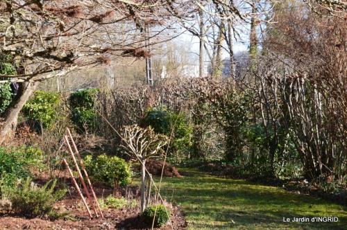 tulipes,crocus ,jardin 038.JPG