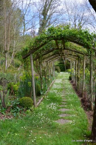 jardin ,cane sauvage,paquerettes,tulipes 130.JPG