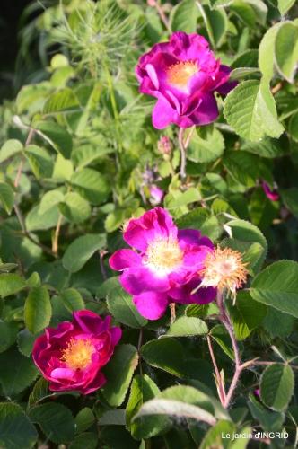 jardin,st Astier,colline 130.JPG