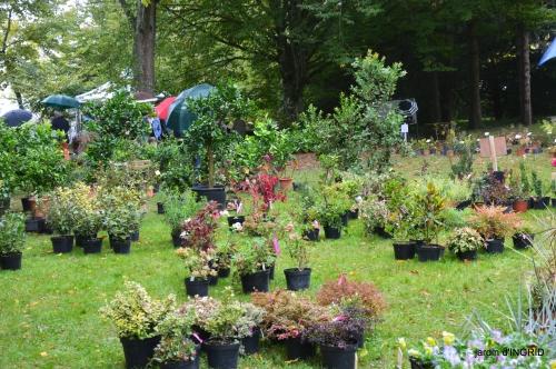 Neuvic,jardin,champignons canal 117.JPG
