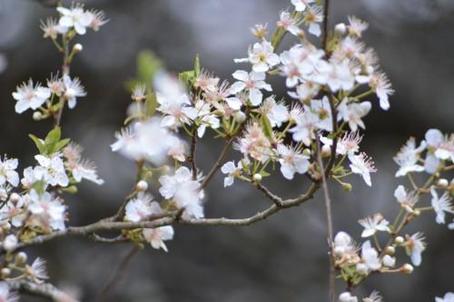 abeilles,zoom fleurettes 036.JPG