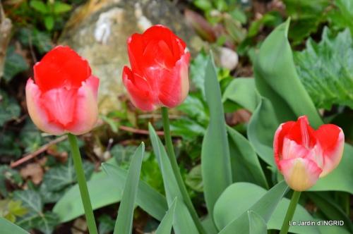 printemps,osier,tipi 041.JPG