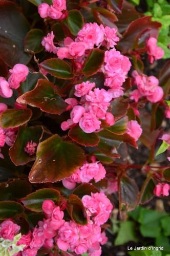 jardin,le cypres chauve,puces Mouleydier,vieilles photos 019.JPG
