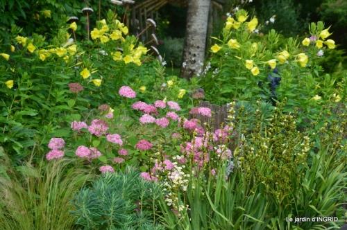 mon jardin,dégats buis, 106.JPG