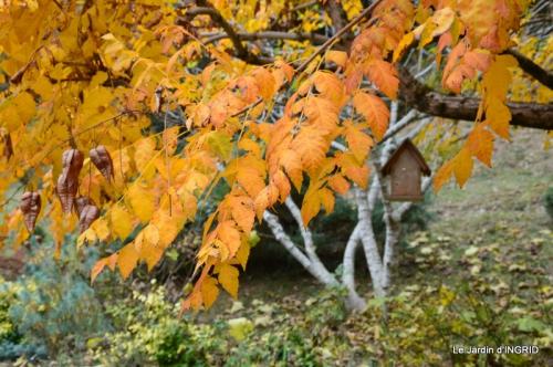 les arbres en automne,cabane 019.JPG