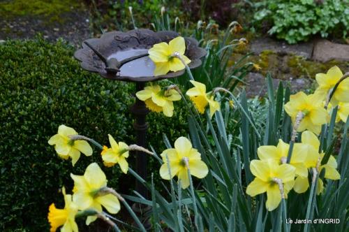 jardin (3 semaine de mars) 091.JPG
