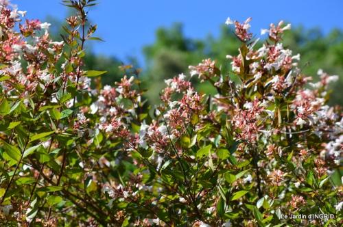 albizia,bouquet,plantes  en A 034.JPG