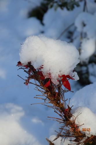 neige sous le soleil 068.JPG