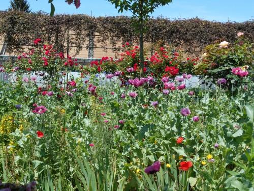 Normandie,jardin Monet,baie de Somme,chez Marylaur 186.JPG