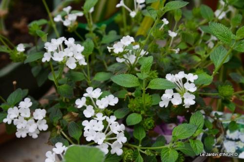 jardin (3 semaine de mars) 046.JPG