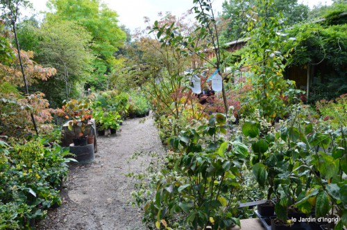 mariage,jardin,la Brande,figues 146.JPG