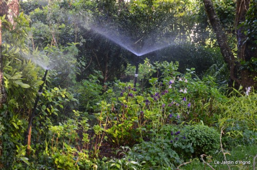 géraniums,glycine Monpazier,cabane,arums,fleurs sauvages 103.JPG