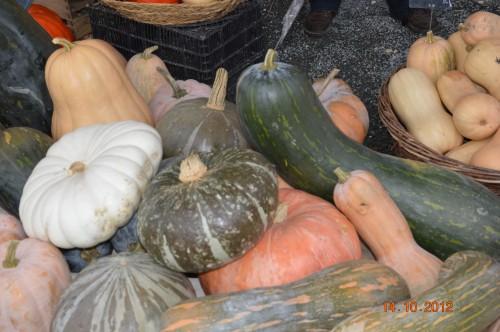 champignons,citrouilles,st Mayme de Péreyrol,fuschias,jardin aut 072.JPG