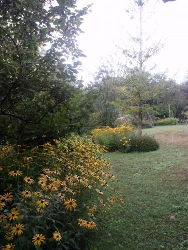 papillon.nuit,7 pigeonniers,Queyssac,jardin 012.JPG
