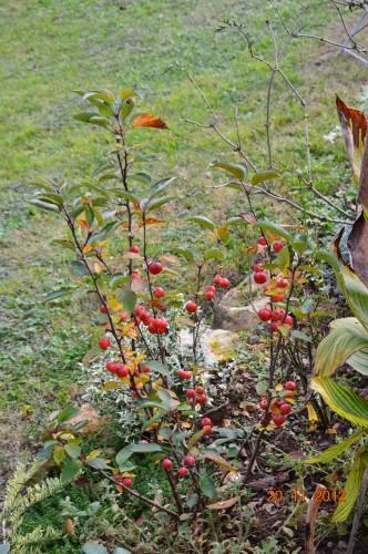 arbres,vues,kaki,kiwi,fleurettes,en fâce 006.JPG