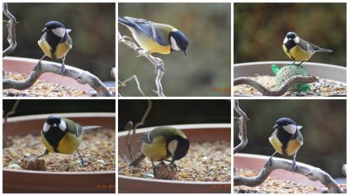 2013-01-13 oiseaux,poules,plantes janvier2.jpg