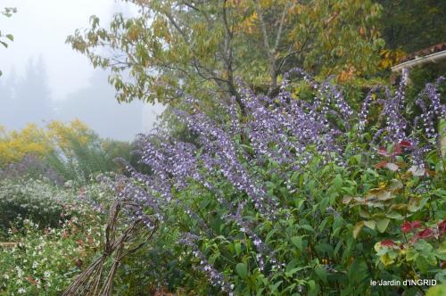 brouillard le matin d'automne 031.JPG