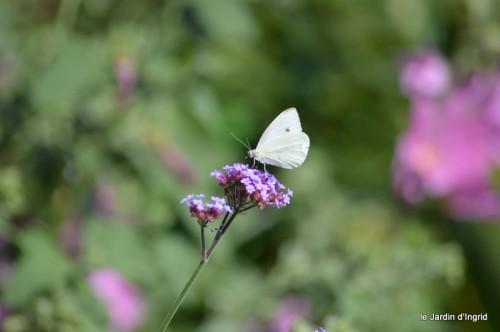 coeur des fleurs,papillons,libellules 158.JPG