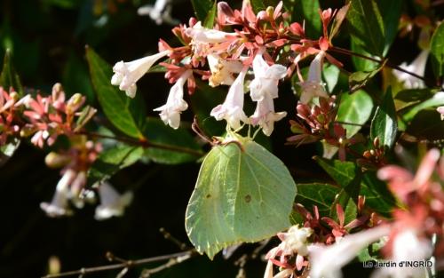 albizia,bouquet,plantes  en A 050.JPG