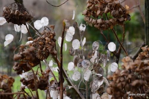 SOL 2014,fleurettes janvier 010.JPG