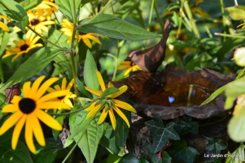 jardin,puces Lasmonzie,asters 034.JPG