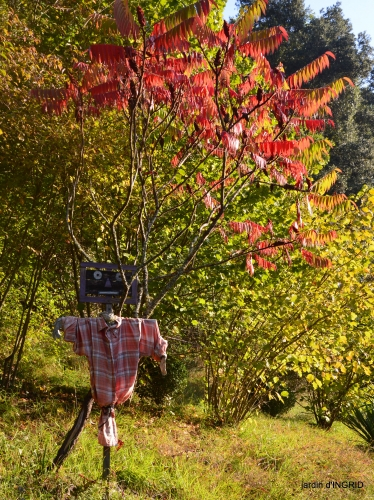 Jardin à l'automne 085.jpg