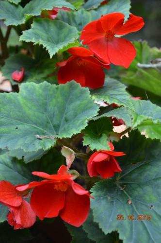 automne,troc2012,Mouleydier,serre 086.JPG