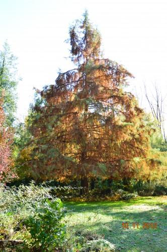 petit érable,le canal et lejardin àl'automne 038.JPG