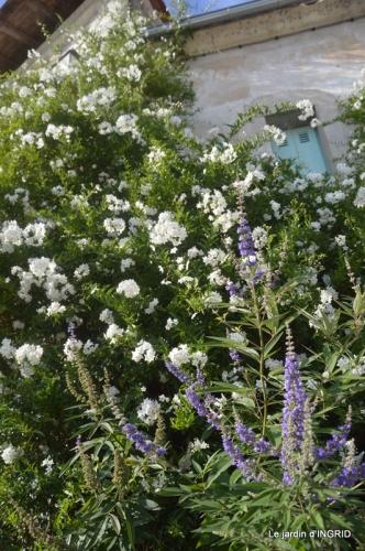 orage,puces,bouquet,Anniv.Ines,Brantome,Jardins d'eau 214.jpg