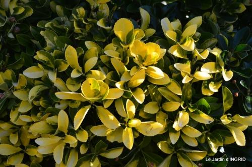 bureau,arbustes dorés 011.JPG