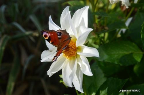 papillons,couleurs d'automne,Bernadette,pluie 020.JPG