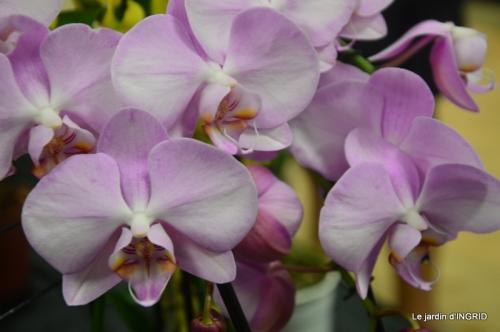 Orchidées,Noel jardiland,lever du soleil 052.JPG