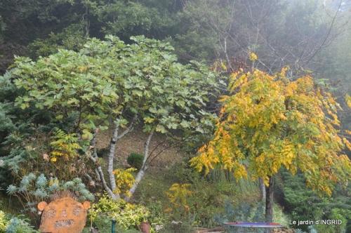 sauges,bouleau,coucher de soleil,érables,automne 117.JPG