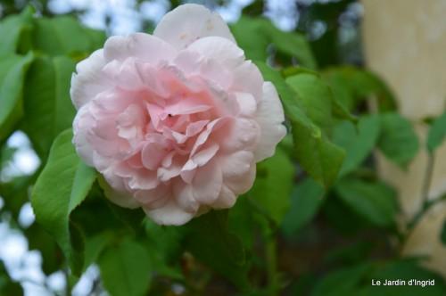 jardin,traditions rurales,les filles,Romane,citouilles,coeurs 005.JPG