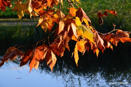 jardin automne,voisinage,canal 082.JPG