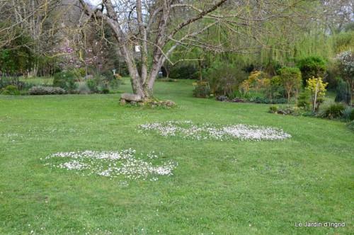 paquerettes,arums,laurier palme,jardin 059.JPG