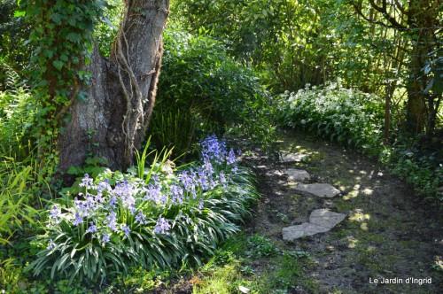 mésanges,escargots,ros. de banks,abeilles,Monpazier,Banes,Forêt 109.JPG