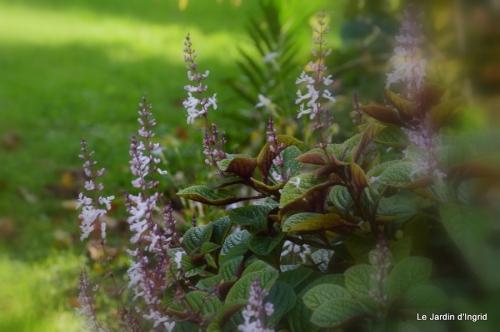 jardin automne ,travaux feuilles 020.JPG