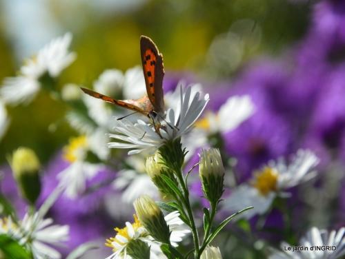 papillons,couleurs d'automne,Bernadette,pluie 029.JPG