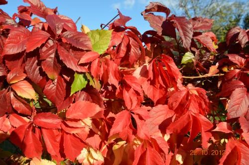 automne,troc2012,Mouleydier,serre 053.JPG