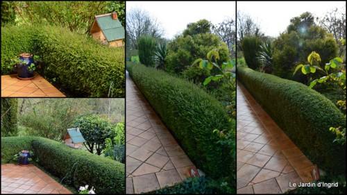 2014-03-28 jardin ,cane sauvage,paquerettes,tulipes.jpg