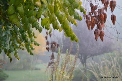 brouillard le matin d'automne 056.JPG
