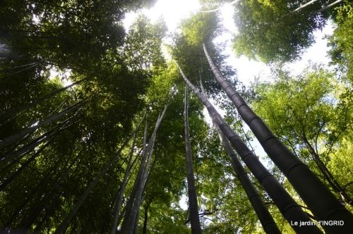 bambous Roque Gageac,jardin,bouquet 170.JPG