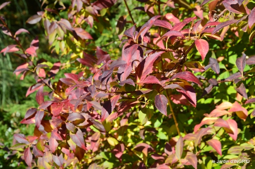 jardin automne,voisinage,canal 147.JPG