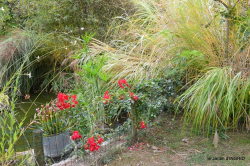 brocante st avit Se.jardin st Avt,récolte tomates 149.JPG